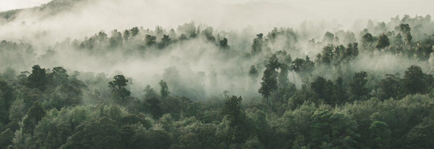 Minska ditt utsläpp